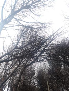 alberi pericolanti (11)