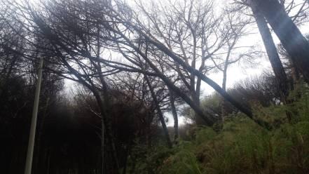 alberi pericolanti (3)