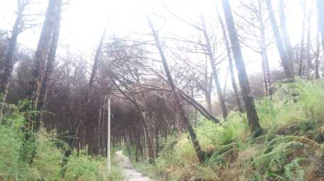 alberi pericolanti (4)